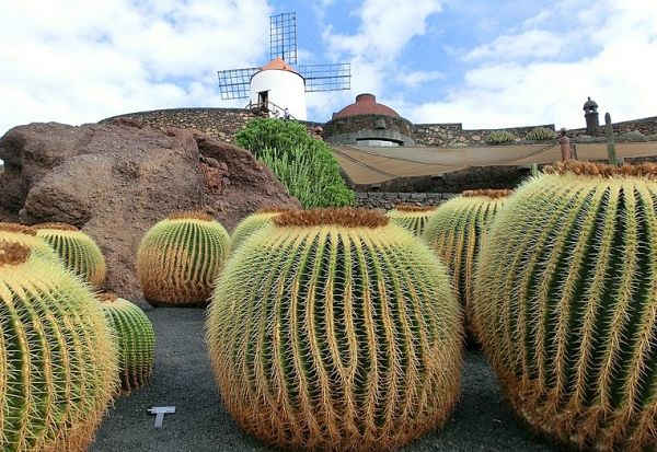 Lanzarote España cactus garden