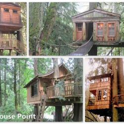TreeHouse Hotel – Book Yourself An Unforgettable Night