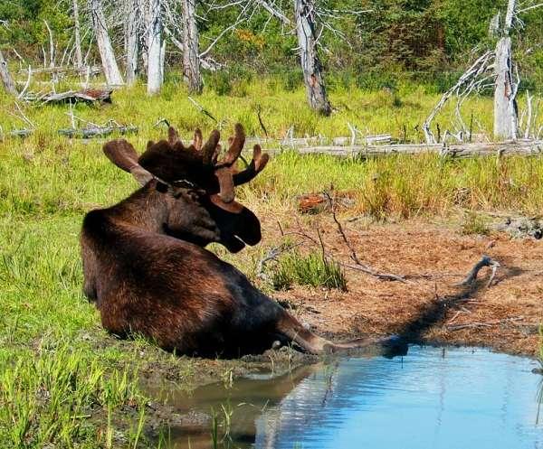 Alaska fishing vacation kenai