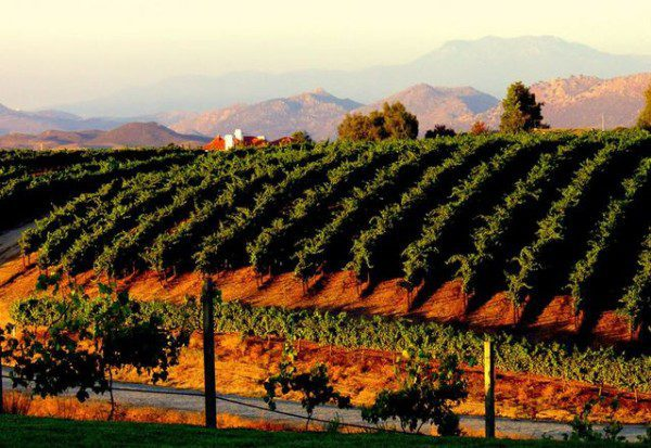 california wine country vacations