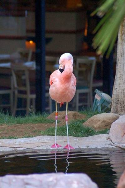 Flamingo Las Vegas Getaway Packages