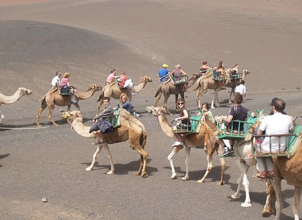 Camel ride upon the volcano on Lanzarote.