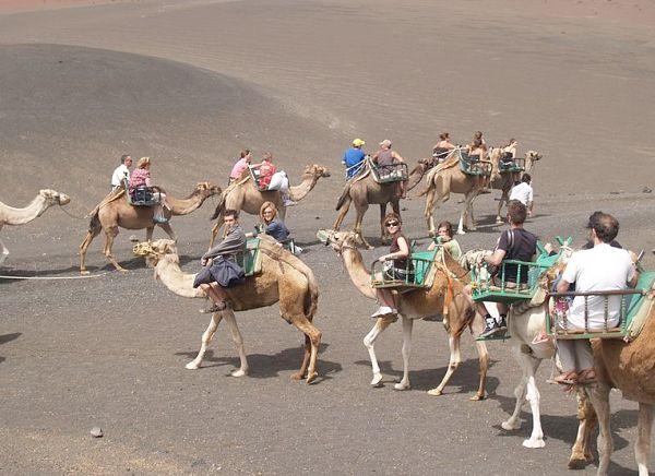 Camel ride upon the volcano on Lanzarote.