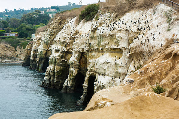 weekend getaway from san diego: the cove la jolla