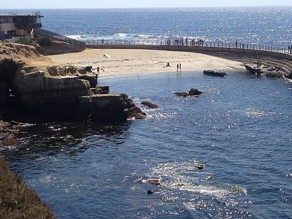 san diego weekend getaway; the sea lions in la jolla