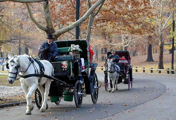 Weekend getaways to New York City - Central Park